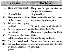 what is the difference between a virus and a bacteria cbse