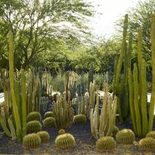 South Texas Botanical Gardens by Visit The Gardens Sunnylands