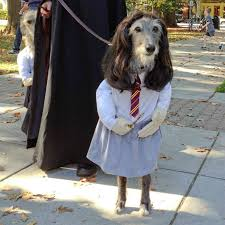 hilarious costumes 20 adorable costume ideas for your pets