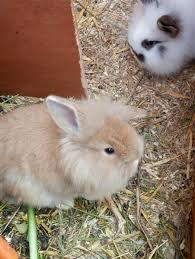 cerco animali da cortile vendita da privato a pc roditori e lagomorfiin vendita animali
