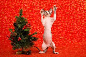 how do you keep your christmas tree safe from cats catster