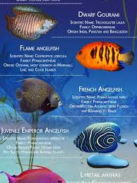 fish infographics visual ly