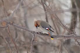 the great backyard bird count has begun northern kittitas