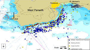Cornwall England Map by Sightings Of Whales Dolphins Harbour Porpoises Basking Sharks