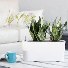 Window Sill Planter by Snake Plant Potted In Modern Windowsill Planter