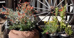 Vertical Garden For Balcony - native plants in container gardening pot plants for deck and balcony