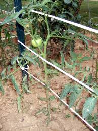 small plant supports gardendesk tomato support