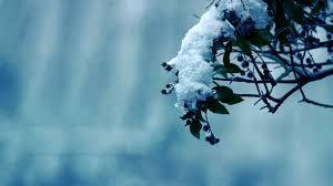 winter flower 6877259