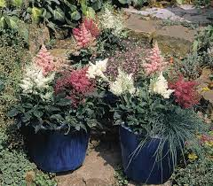 grow astilbe in a shady garden bed for long lasting summer color