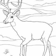 free printable deer coloring pages kids deer coloring sheets