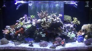 led aquarium lights for reef tanks marineland reef capable led lighting review youtube