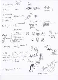 Gross Anatomy Of The Brain And Cranial Nerves Pdf Cranial Nerve Exam Cheat Sheet Cranial Nerves Pinterest