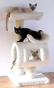 Free Diy Cat Tree Plans by Build Free Cat Furniture Plans Diy Pdf Monks Bench Plans Sleepy78ouh