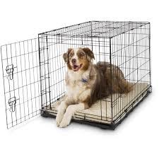 crate training petco classic 1 door dog crates petco