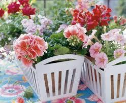 topfpflanzen balkon ratgeber balkonpflanzen auswählen pflanzen und pflegen