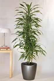 our diverse plant selection greencare interior plants houston tx