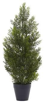 2 mini cedar pine tree indoor outdoor contemporary
