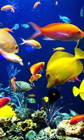 wallpaper ikan bergerak untuk pc aquarium ikan bergerak