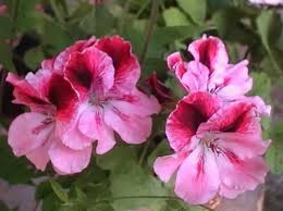 plants and flowers that grow well in partial or light shade