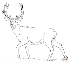 Deer Color Page deers coloring pages free coloring pages