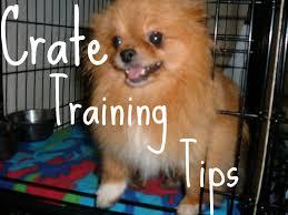 crate training crate train your dog pomeranian crate training petcaretips