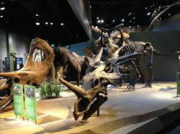 dinosaur reconstruction real bones picture of perot museum of
