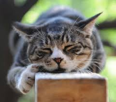 cat home decor feral cat coalition of oregon