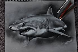 great white shark by sjhowell11 on deviantart