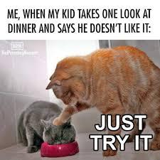 Success Cat Meme - pretty much me most nights at dinner school mum success facebook