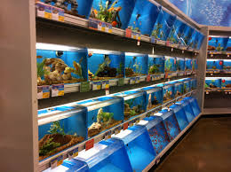 petsmart thanksgiving hours petsmart all i want is to be where the fish are petsmart