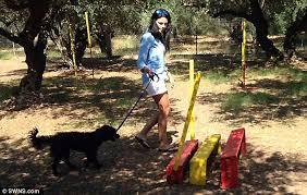 british woman brings stray dog crete stopped