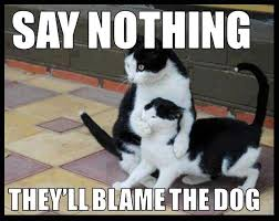 Nothing To Say Meme - say nothing they ll blame the dog humor cat meme humor