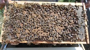how do bees make honey city boy hens