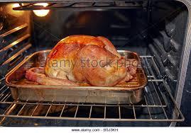 thanksgiving turkey roasting in oven stock photos thanksgiving