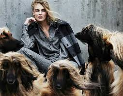 owning an afghan hound 88 best afghan hounds images on pinterest afghans afghan hound