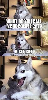 Spongebob Licking Meme Maker - best 25 meme maker ideas on pinterest angry cat memes grumpy
