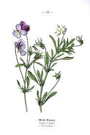 775 vintage botanical flowers premium member public domain images