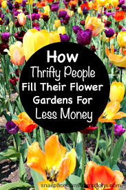 how thrifty people fill their flower gardens for less money jpg