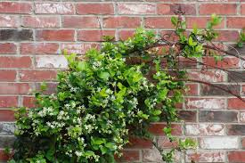 roses and other gardening joys deck the wall