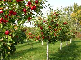 terrific small backyard orchard pics decoration inspiration amys