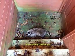 wildlife removal brampton raccoon squirrel bird nest removal
