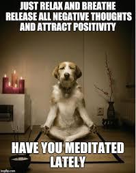 Advice Dog Meme Generator - dog meditation funny latest memes imgflip