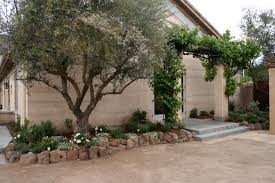 grapevine trees grapevine trees with landscape traditional with fruit tree cast
