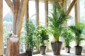 plantes pour bureau 7 plantes parfaites pour le bureau secrétaire inc