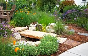 colorado native plants 10 things you didn u0027t know about