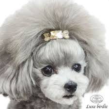 different toy poodle cuts 30 different dog grooming styles dog grooming styles dog and poodle
