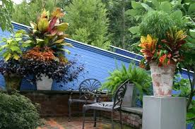 Gardening Zones Uk - best tropical garden plants uk tropical plants garden uk tropical