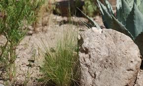 native plants albuquerque gardening in a drought u2013 desert southwest gardening can be