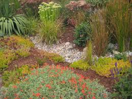 portland native plant list chickadee gardens just a with a hammer a portland garden