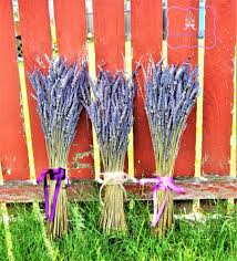 rustic dried lavender simple bridesmaids or bride u0027s wedding